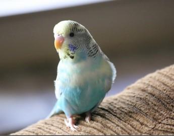 Birds – Petland Florida