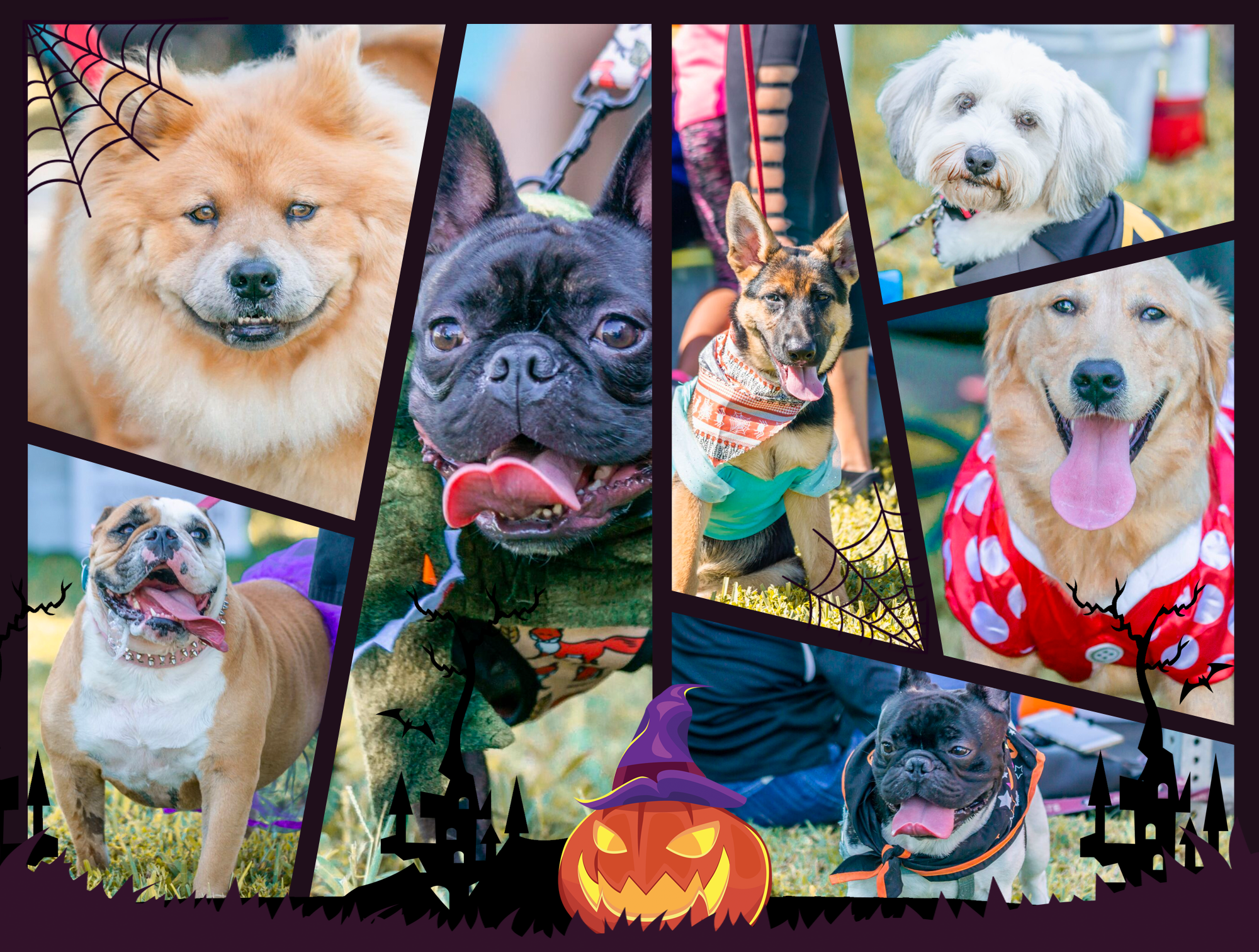 The 6th Annual Bow Wow Ween Celebration Petland Florida