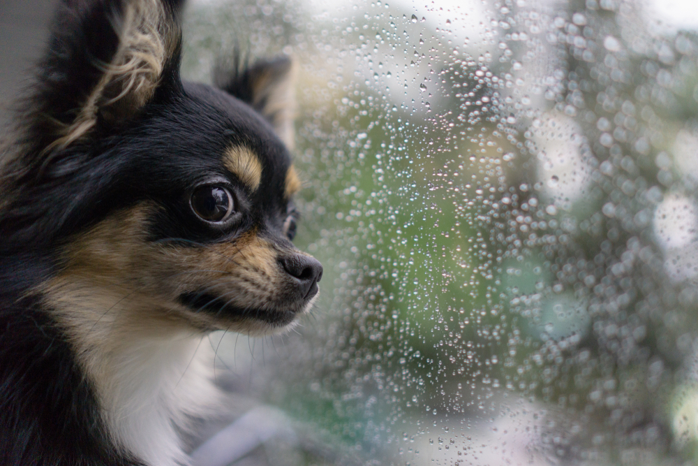How to Calm Your Puppy During a Thunderstorm – Petland Florida